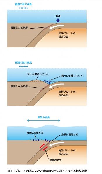 の 仕組み 津波